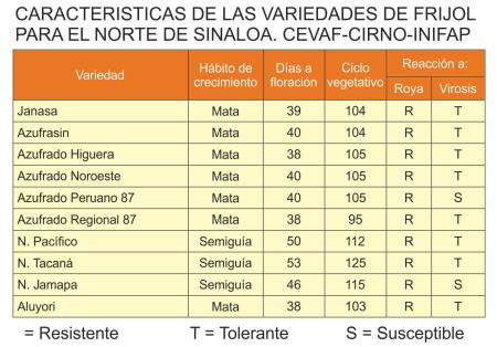 Variedades de Frijol recomendadas para el Norte de Sinaloa